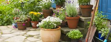 creating beautiful container gardens in small spaces