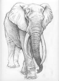 Sketches Animal Marcello Pettineo Animal Sketches Drawings Sketches Animal