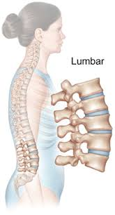 """""""lumbar"""" ile ilgili görsel sonucu"""