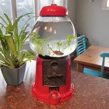picture of finish fish tank