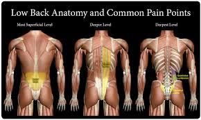 quadratus lumborum (ql) muscle massage
