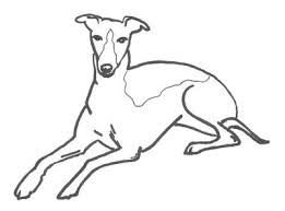Small Picture Greyhound coloring Download Greyhound coloring