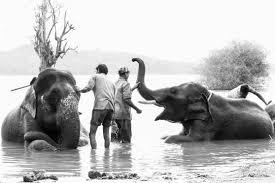 elephants in captivity phouto 0709 2