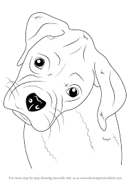 Small Picture Learn How to Draw Boxer Puppy Face Farm Animals Step by Step