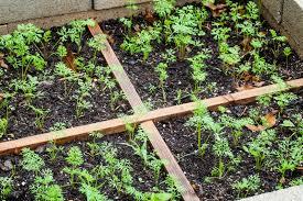 Kitchen Gardening For Beginners Vegetable Gardening Tips For Beginners