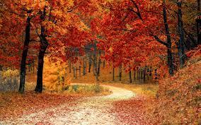 Autumn Season Wallpapers - Top Free ...