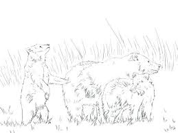 Ferret Coloring Pages Baby Draw Cute Respect
