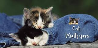 cute cat hd wallpapers