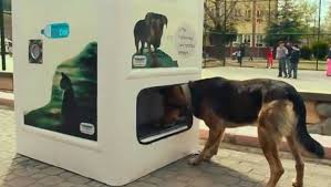 Dog Park Vending Machines Magnificent What Does It Cost To Feed A Stray Dog In Istanbul A Plastic Bottle