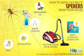 how to kill spiders in house. Here Are The Top Ways To Get Rid Of Spiders From Your House Natural Way Kill How In