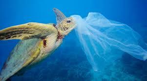 Risultati immagini per giornata mondiale del sacchetto di plastica