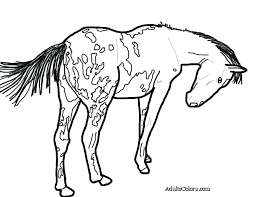 horse coloring pages that you can print tiny horse free printable horse coloring pages for s horse coloring pages
