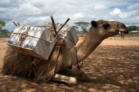 Image result for books on a camel