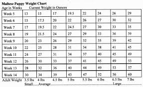 Cane Corso Growth Chart 29 Explanatory Golden Retriever Height Chart