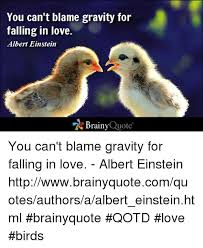 Birds Quotes Love Bird Quotes Alluring Quotes About Love Birds Dobre For 63