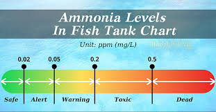 Best Guideline How To Reduce Ammonia In Fish Tank Happy
