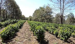 Well you're in luck, because here they come. Where Do Coffee Beans Come From