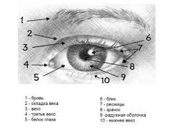 Как нарисовать <b>глаз</b> и <b>бровь</b> человека <b>карандашом</b> поэтапно? (с ...