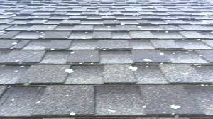 roof cleaning lichen removal from asphalt shingles