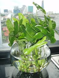 tropical office plants. Finest Tropical Indoor Plants About Gwak Nguen Pic Office T