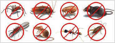 Pest Control Website Design @ Rs. 3800 - Zauca - 18002129495 - Website Design