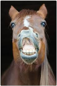 horse face teeth. Simple Face As Well As Routine And Corrective Dentistry We Also Remove Wolf Teeth At  Your Yard Or Stables If You Prefer Sedate Horses For EDT And Horse Face Teeth O