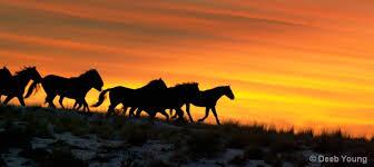 horses running in the sunset. Beautiful Horses Wild Horses Running Sunset  Photo5 Intended Horses Running In The Sunset