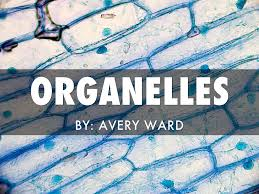 Organelles by Avery Ward
