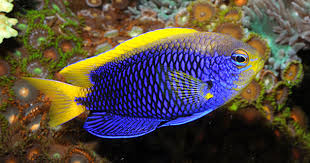 Coral Friendly Fishes Fish Behavior And Habits That Affect