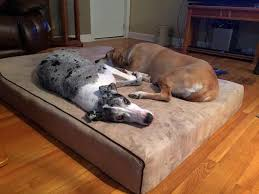 Buy Orthopedic Extra and XXL Dog Beds – BullyBeds
