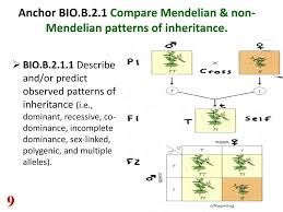 Mendelian Patterns Of Inheritance Simple Decorating