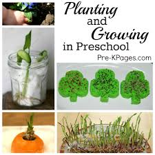 science planting with preschoolers