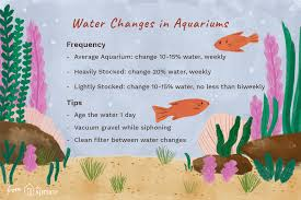 Fish Tank Maintenance Chart Tips For Changing The Water In Your Aquarium