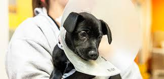 Spay Neuter Your Pet Aspca