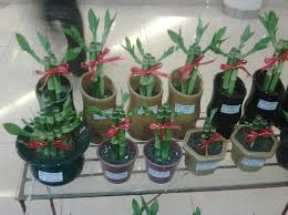 feng shui plant office. Symbolism And Meaning Feng Shui Plant Office