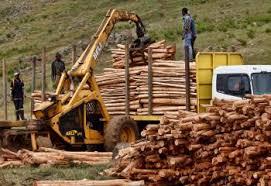 Commercial Logging Global Forest Atlas