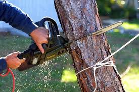 do i need a license to cut down trees tree removal talklocal