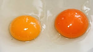 Egg Yolk Colour Chart This Is What The Color Of Your Egg Yolk Means