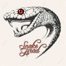snake head side view drawing. Drawing Snake Head King Cobra At Getdrawings Free For Personal Use In Side View