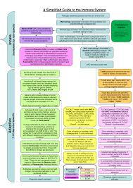 Immune System Flowchart On Meducation