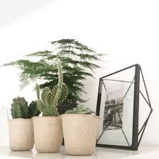 Cactusjes In Kweekpotjes Op De Lockerkast Prisma Fotolijst Met Een