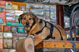 Es erfüllt jeden hundebesitzer mit freuden, wenn der hund gesund ist und aus eigener kraft rennt, spielt und springt. Tragehilfe Hund Test Vergleich 2020 Modern Dogs De