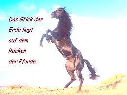 Pferd Gb Pics Sonstige Sprüche Gästebuch Bilder Jappy