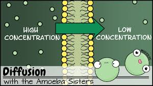 Biomagnification and the trouble with toxins. Amoeba Sisters On Twitter And More All Videos Can Be Found In Our Biology Youtubelearning Playlist Https T Co Hmi23slcey 2 3 Chinese Subtitles For Cell Transport Vid Monohybrid Vid Arabic Subtitles Alleles Genes