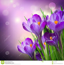 Image result for spring flowers