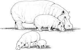 Christmas Hippopotamus Coloring Page With Hippo Mask Printable For