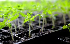 how to start seeds indoors growing