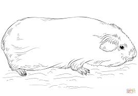 Kleurplaat Konijn En Cavia Ausmalbilder Meerschweinchen Zum