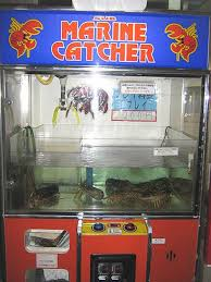 Lobster Vending Machine Unique Bizarre Things You Can Buy From Vending Machines Around The Globe
