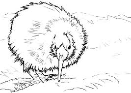 Small Picture New Zealand Kiwi Bird Coloring Pages Download Print Online